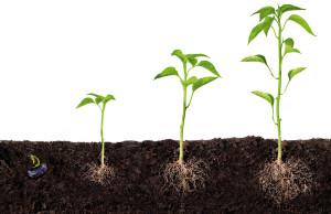 groeiende-plantjes